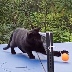 Tischtennis mit Bagira